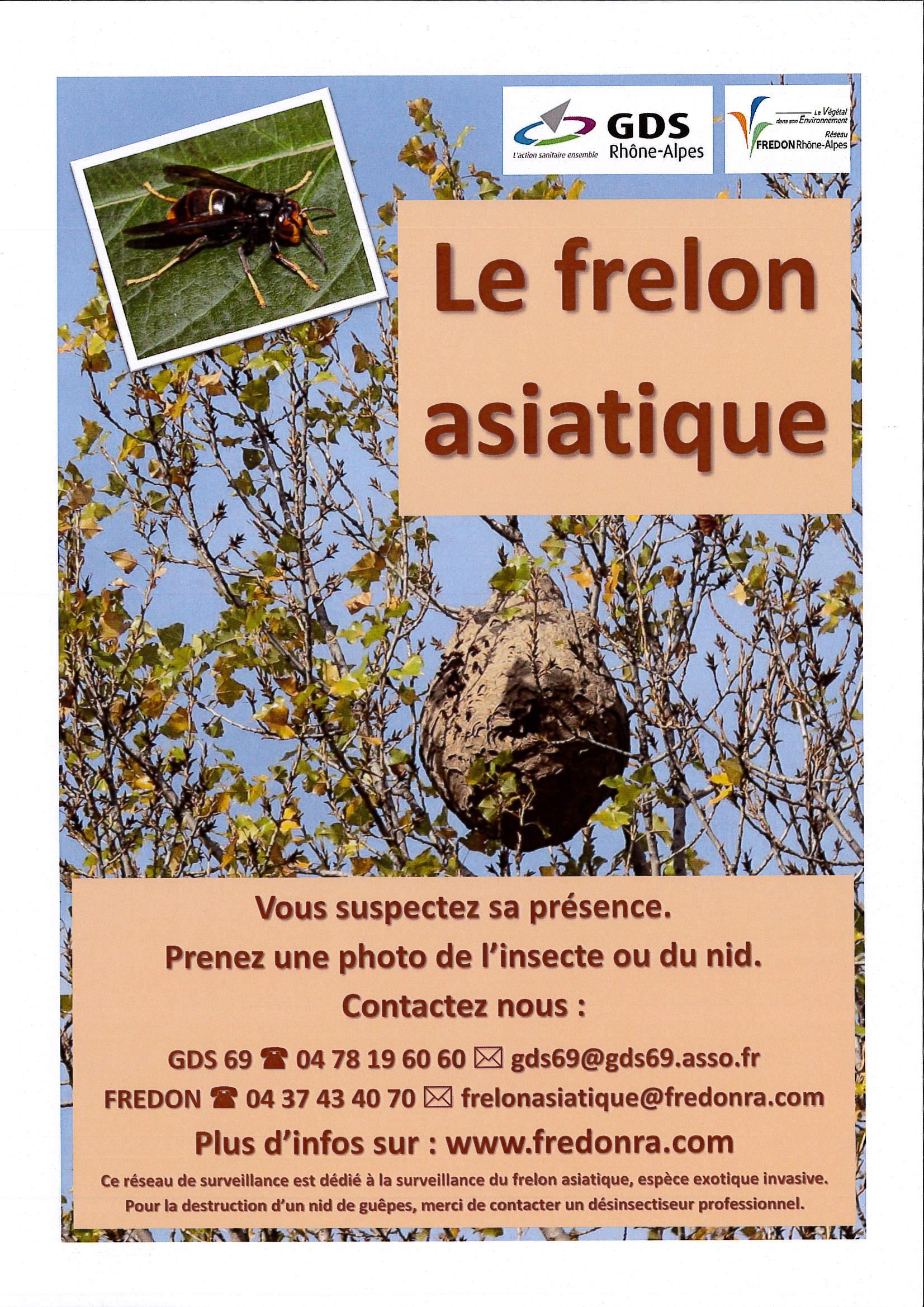 no-a-contacter-frelon-asiatique